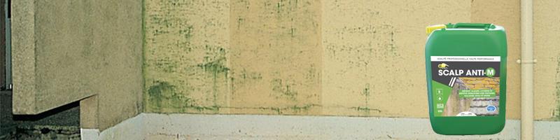 nettoyage façade anti mousse
